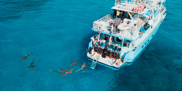 Tiger Shark and Hammerhead Combo Dive Trip in Bahamas
